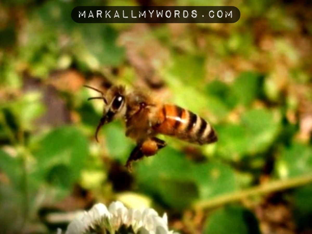 Bee in flight
