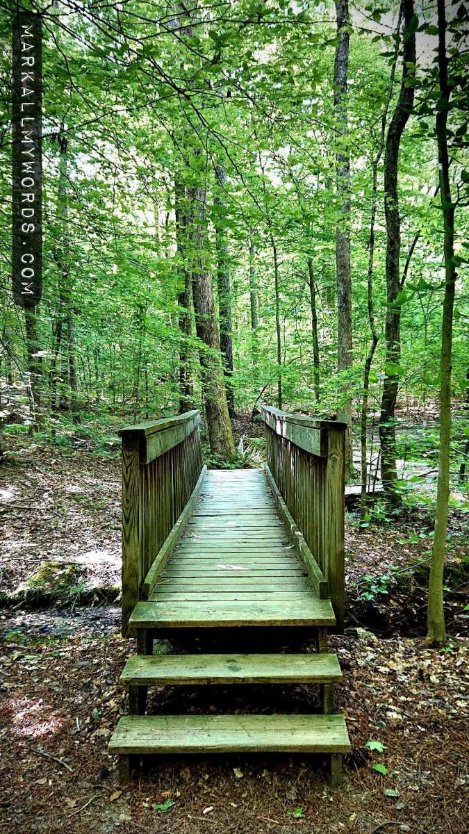 Wooden footbridge over creek