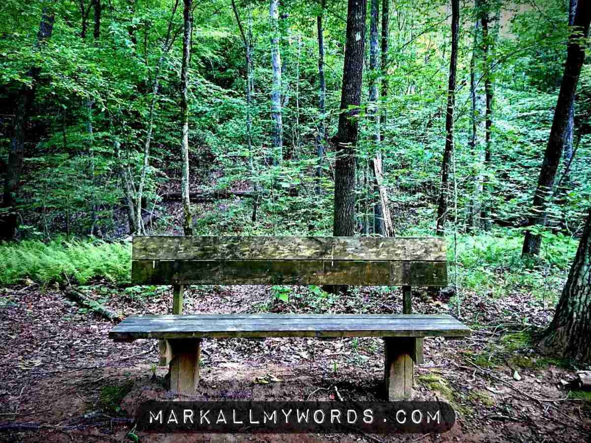 Wooden bench by Occoneechee Mountain Trail with fern grove