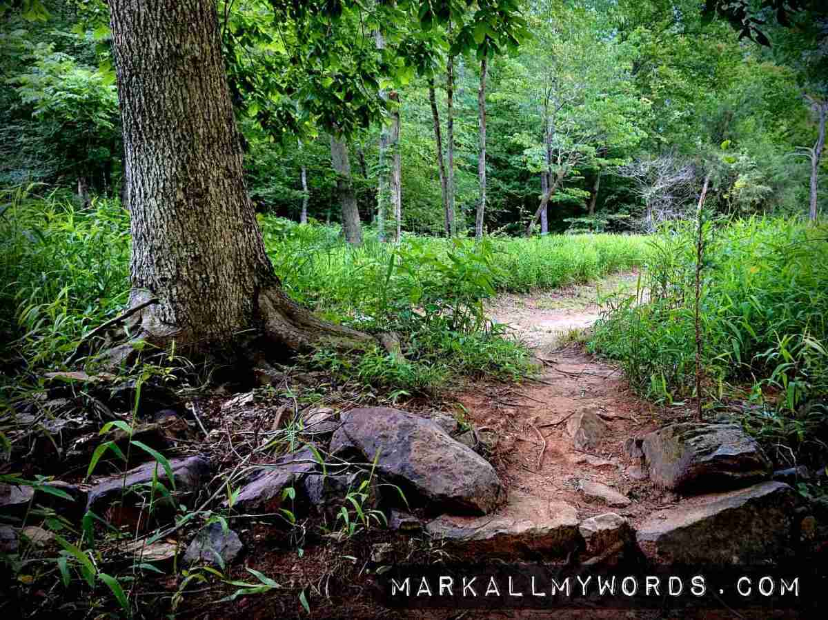 Red dirt trail winding through stones and tall grass