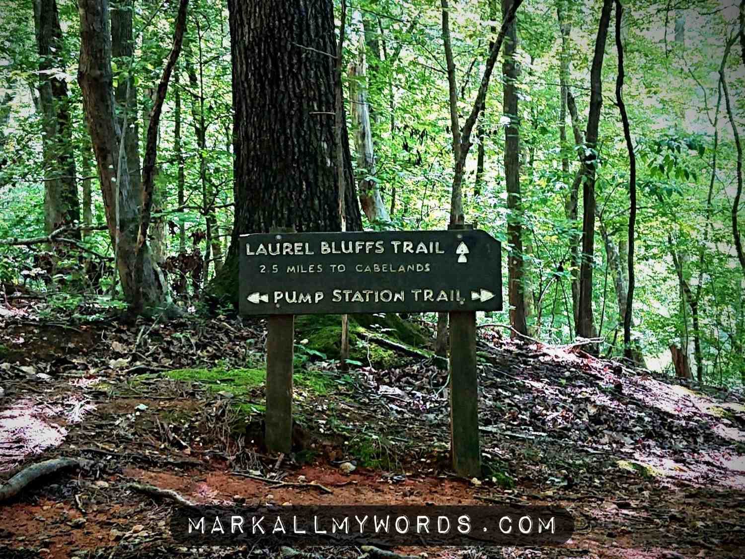 Sign in forest pointing to trail