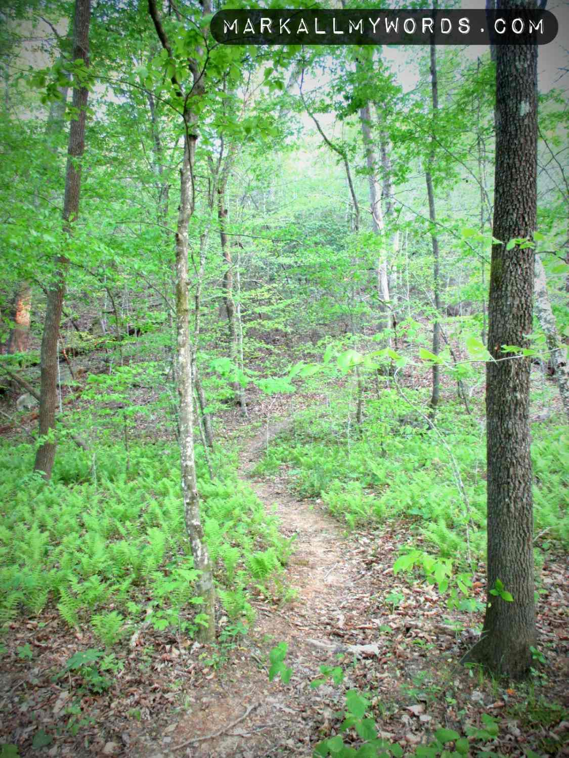 Trail leading to and from Panther's Den