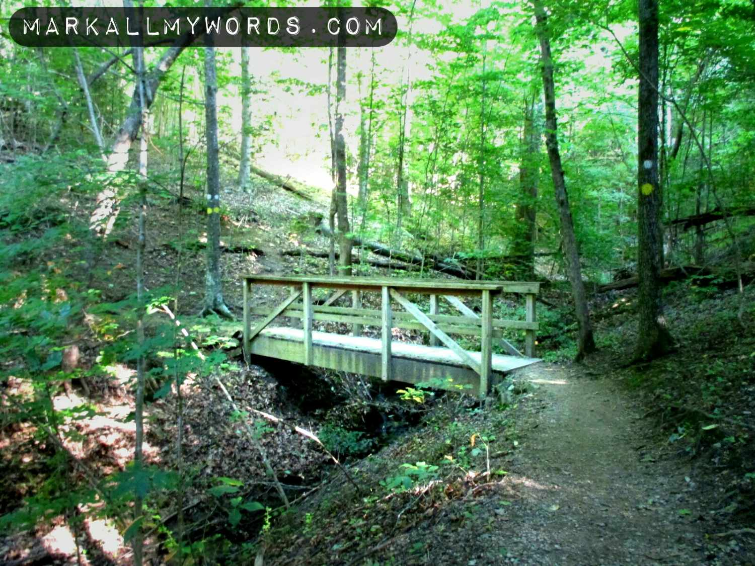 Bridge over an unnamed creek on Laurel Bluffs Trail