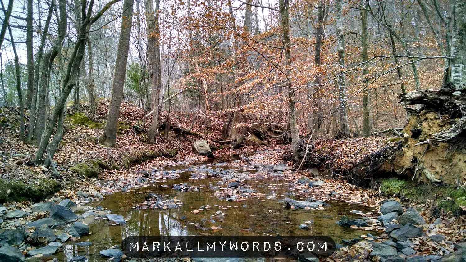 Rhodes Creek, near the Eno River Rock Quarry