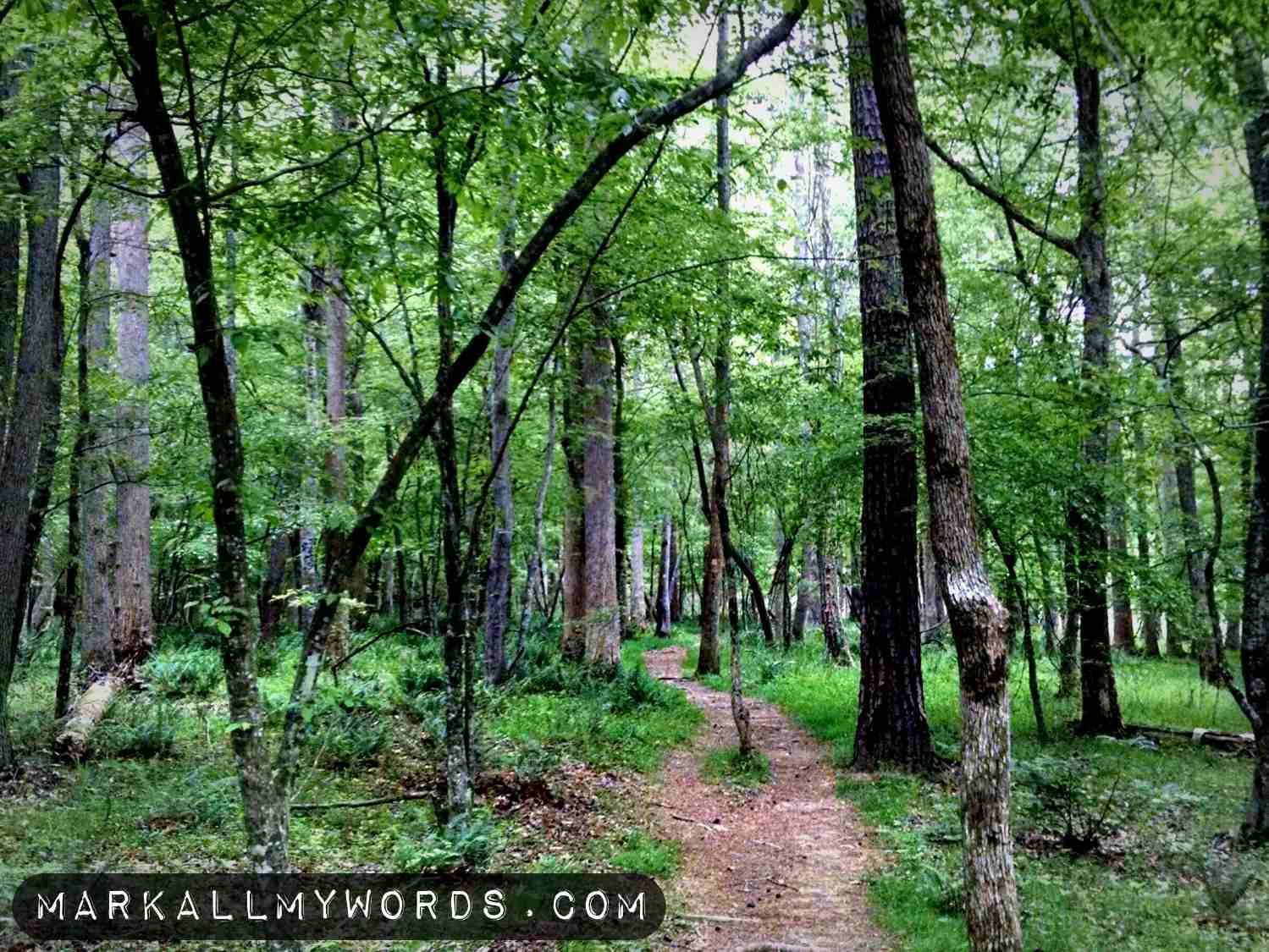 Laurel Bluffs Trail near ruins of Cole Mill