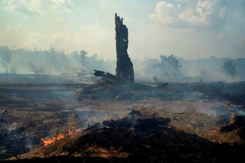 Forest burns in Brazil's Amazon.