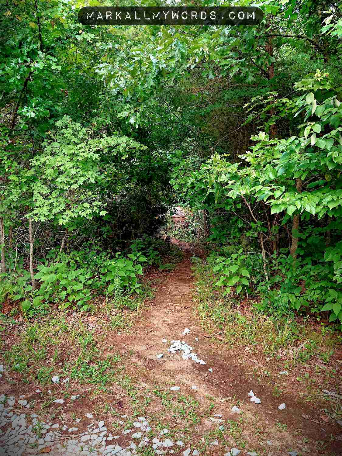 Trail through woods