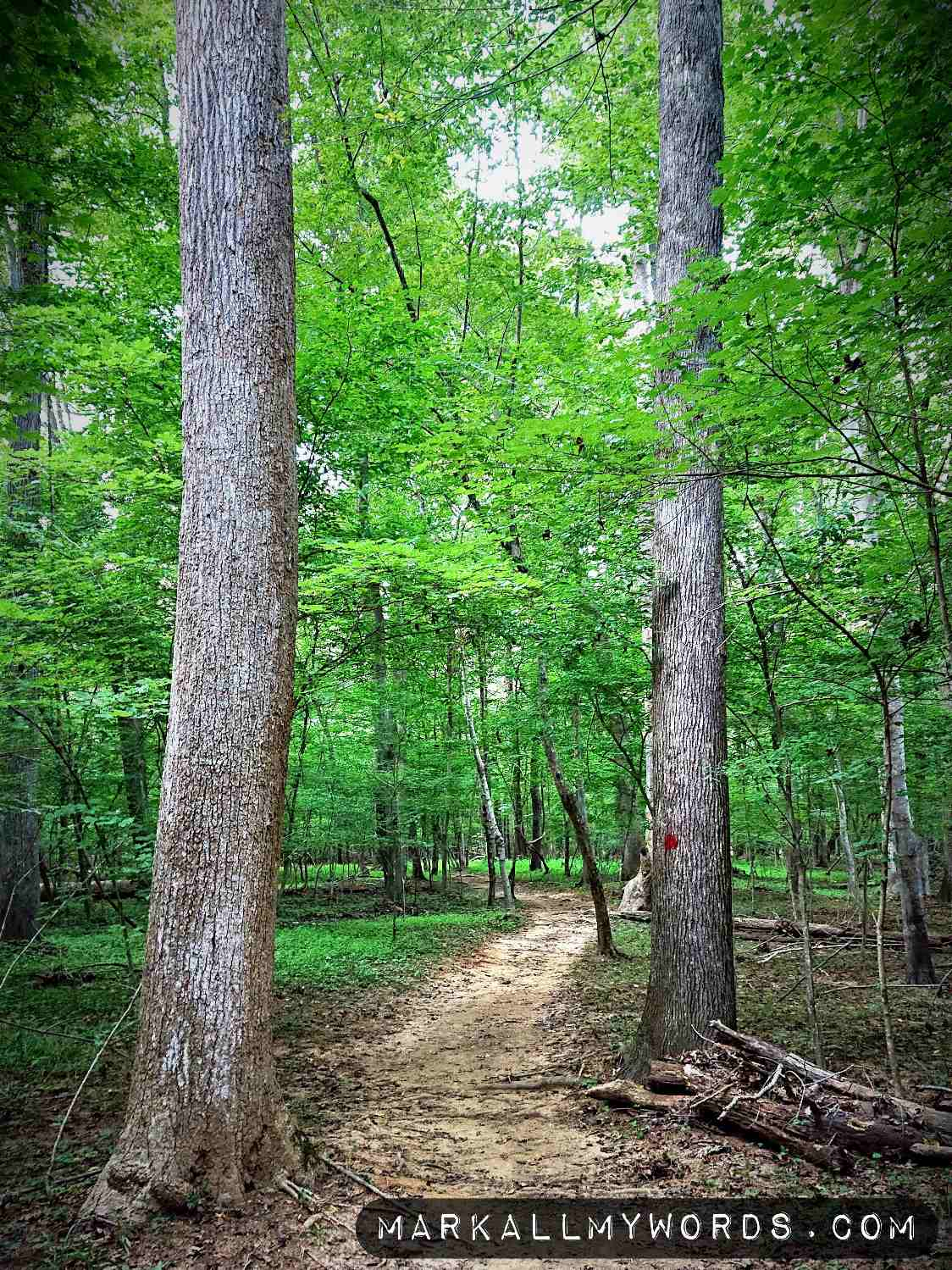 Tall trees near Bobbitt Hole