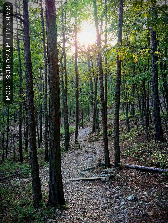 Sun shining through pine trees on Occoneechee Mountain Trail