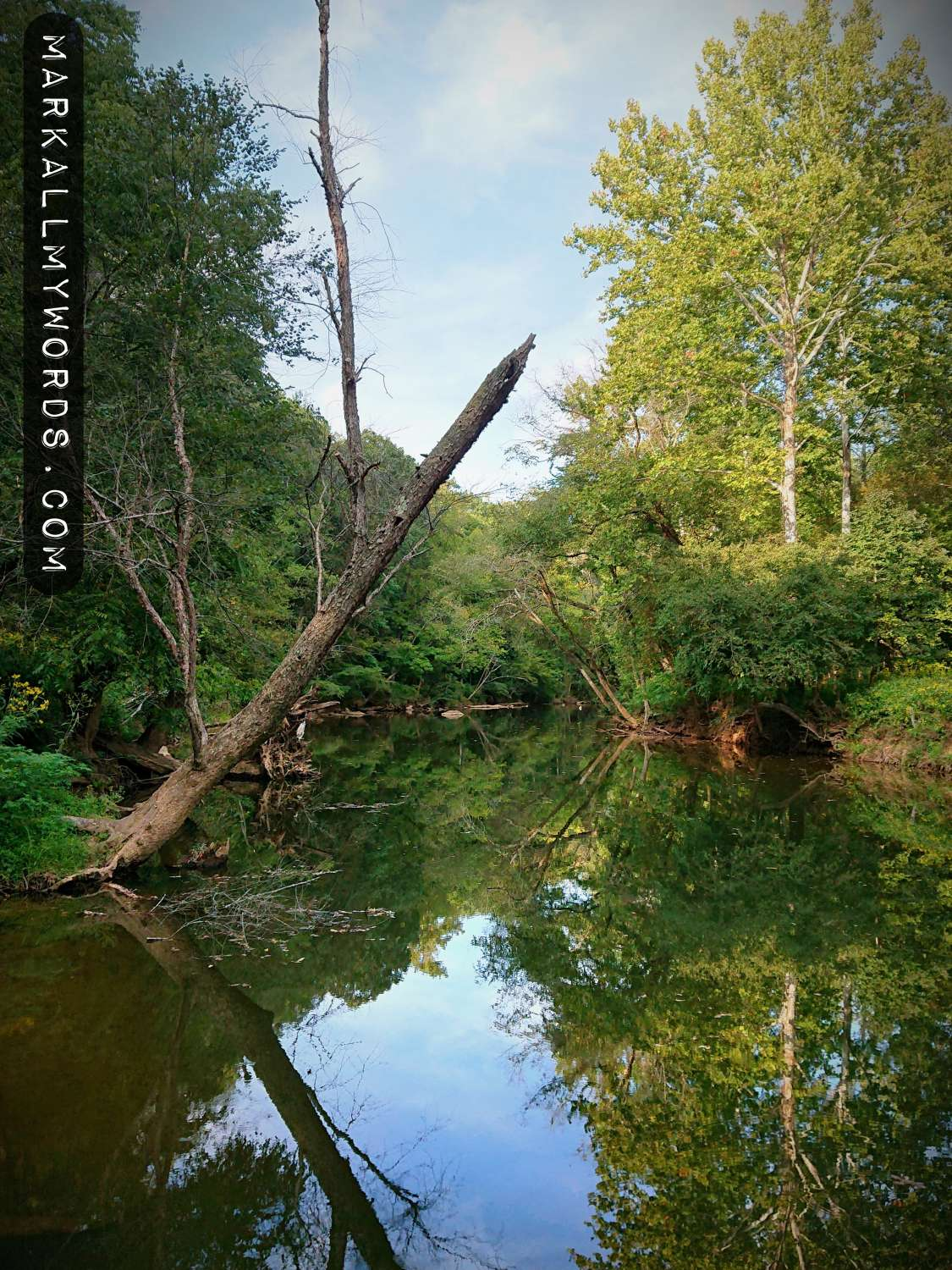 River birch overhanging the Eno River