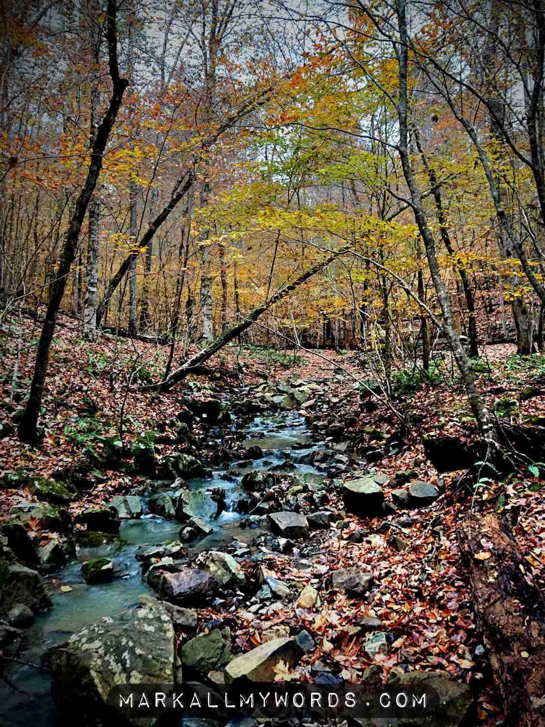 Creek with fallen leaves