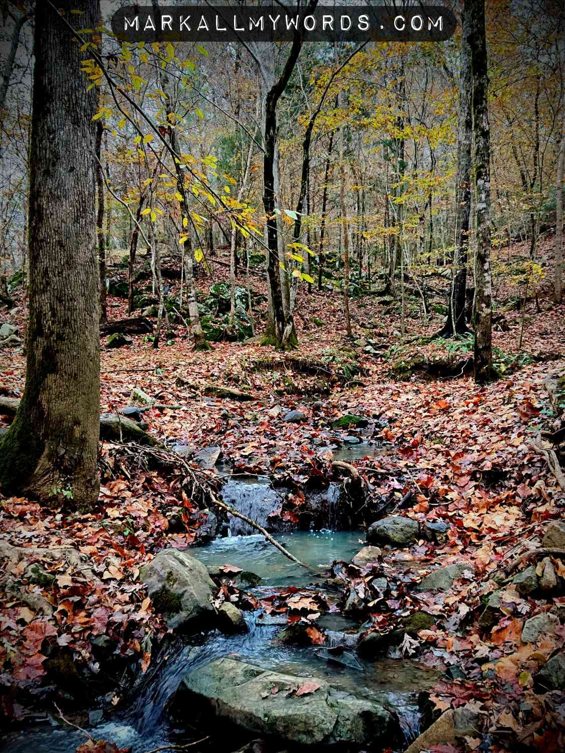 Creek with fallen leaves and stones