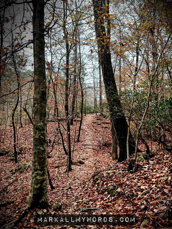 Laurel Bluffs Trail in fall