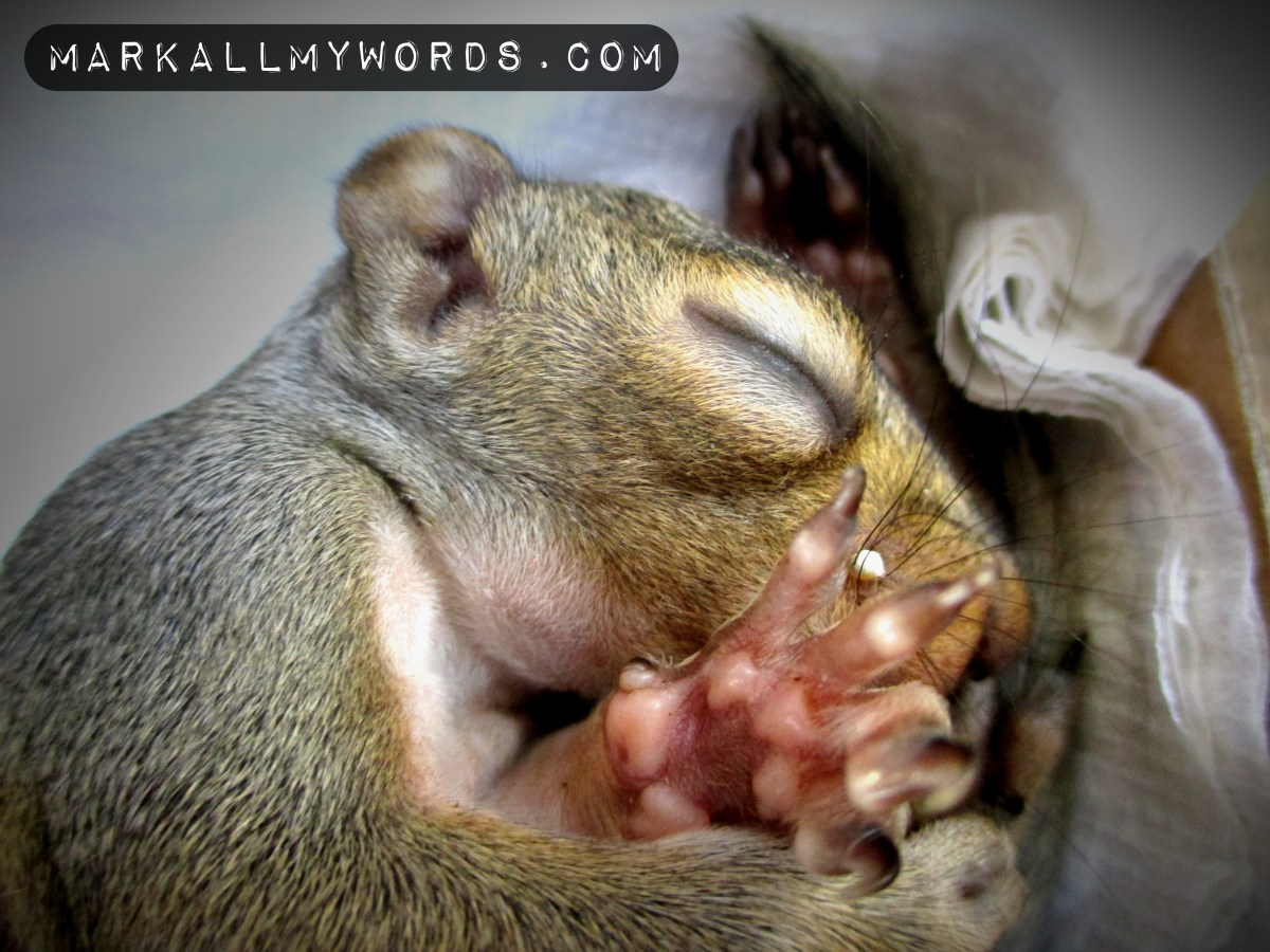 Baby squirrel with eyes closed