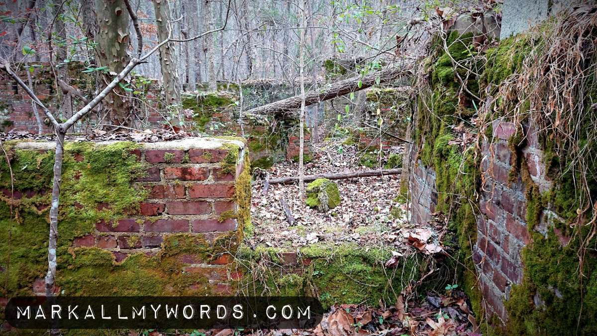 Mossy brick of old building