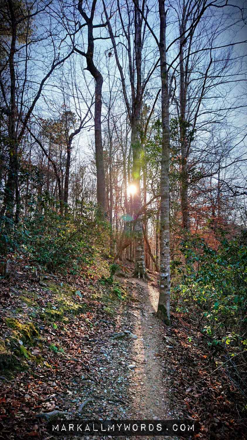 Burst of sunlight through branches on trail