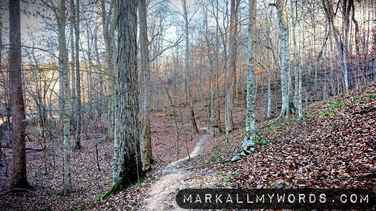 Laurel Bluffs Trail in winter