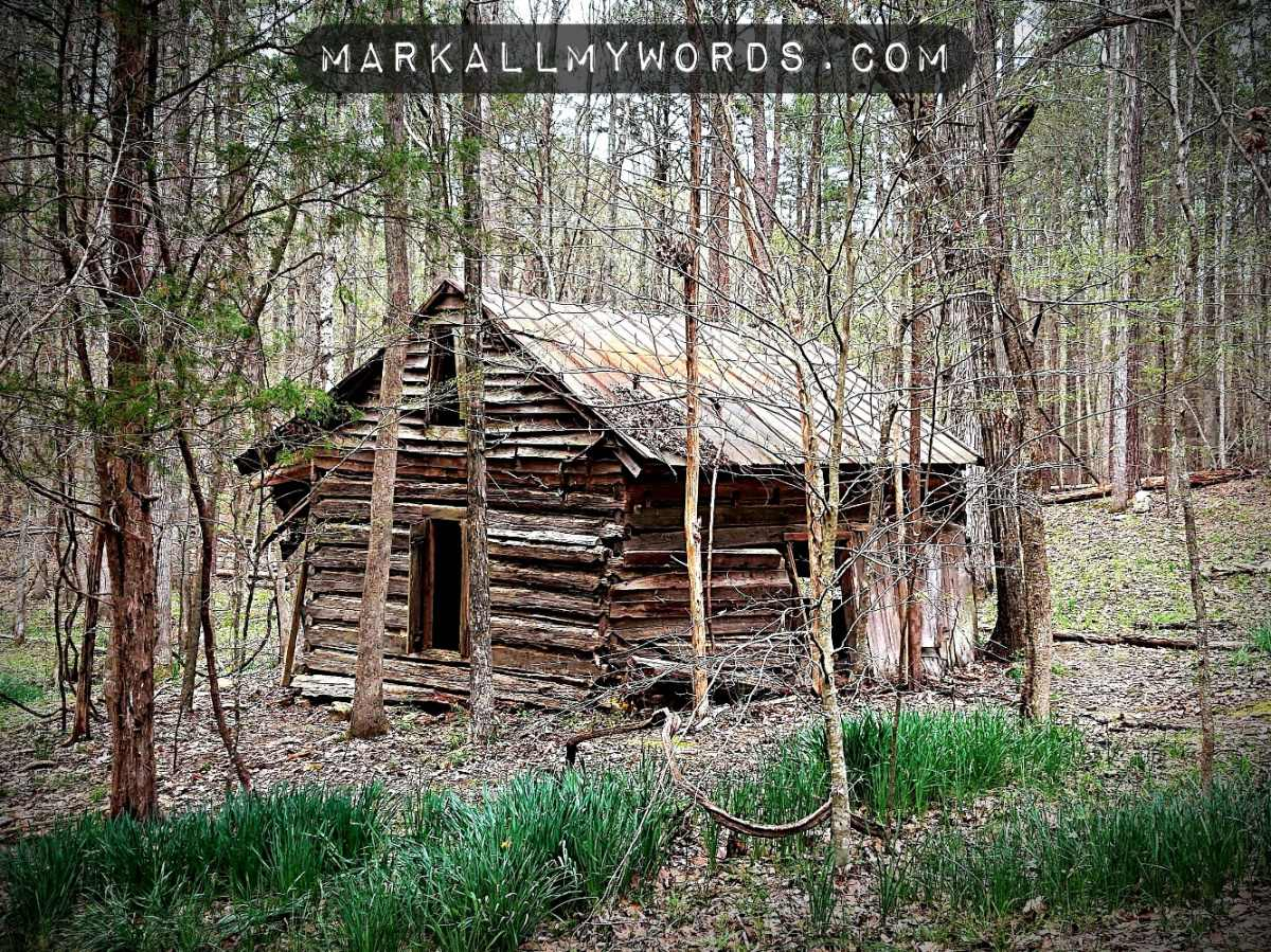 Sister's House, an old cabin with daffodils