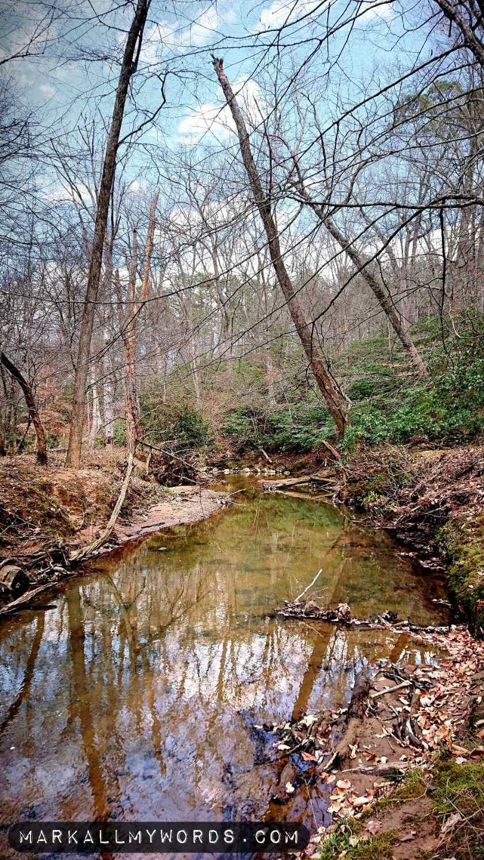 Warren Creek with a ridge of mountain laurel