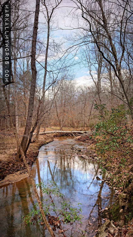 Warren Creek with a fallen tree
