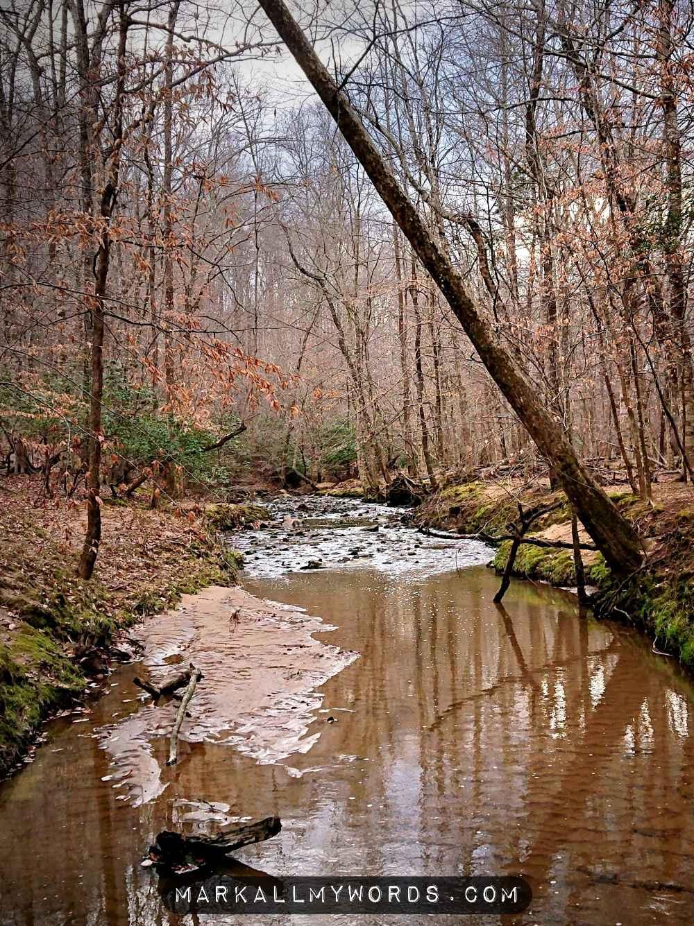 Warren Creek with an overhanging tree
