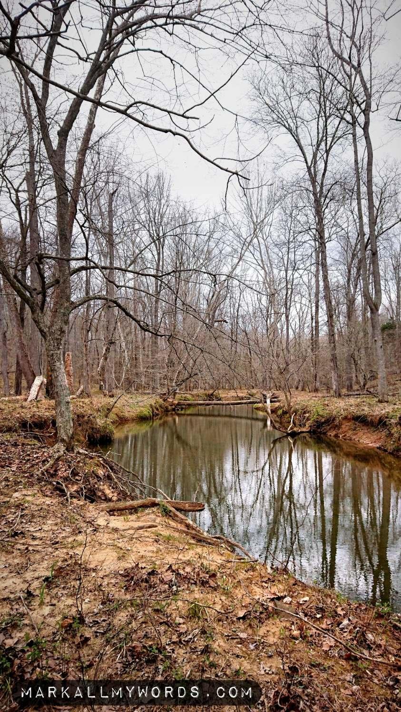 Buckquarter Creek with fallen tree in distance
