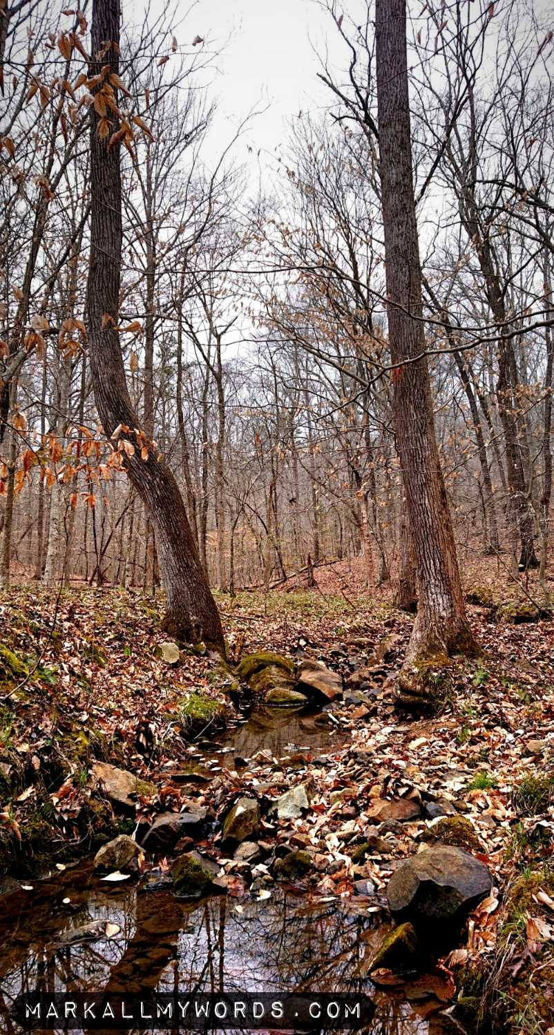 Creek with bare trees on Fieldstone Trail