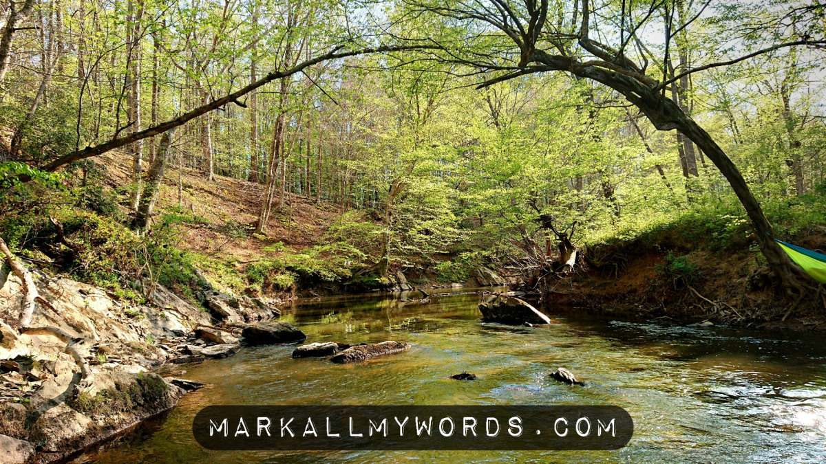 Eno River near Beech Bluff Trail with new green foliage on trees