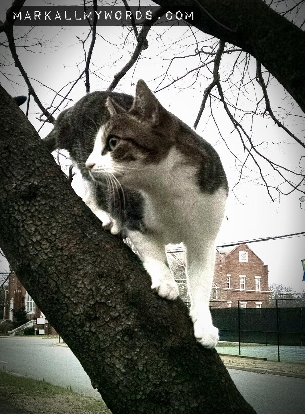 White and gray cat in branches of a tree