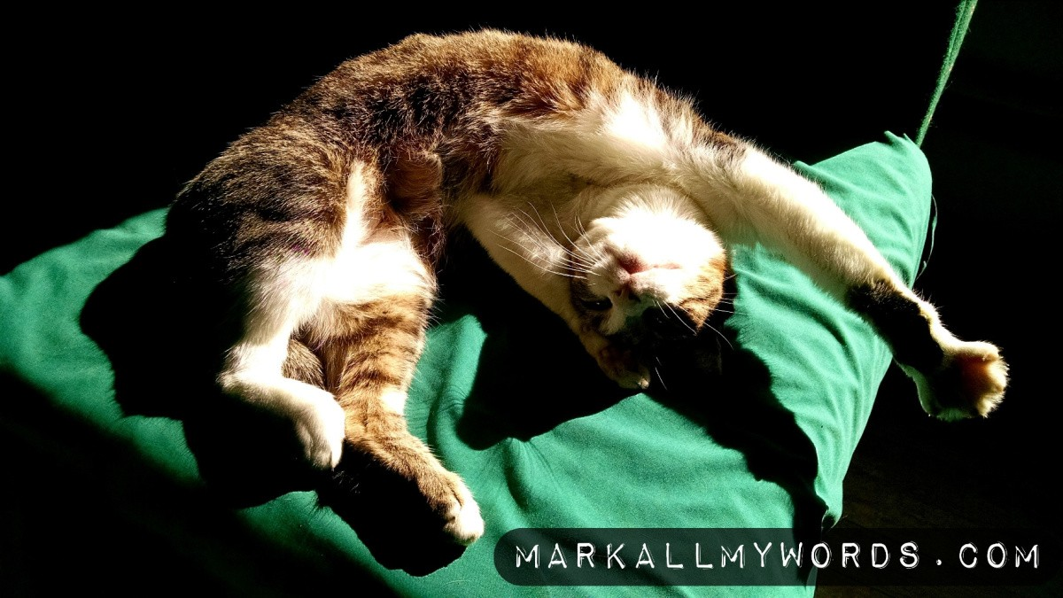 White and gray cat with outstretched arm in sunlight