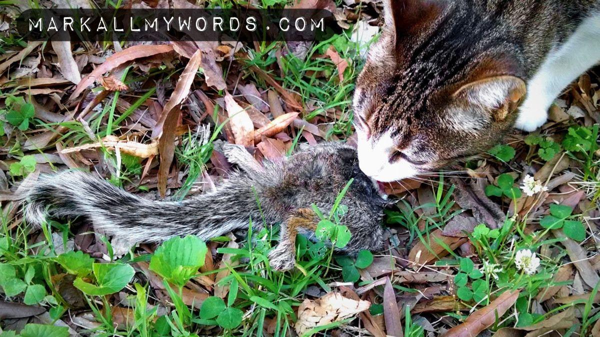 Cat eating dead squirrel