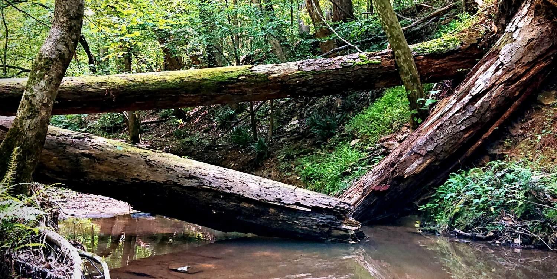 Fallen trees over creek