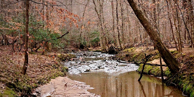 Warren Creek with tree overhanging