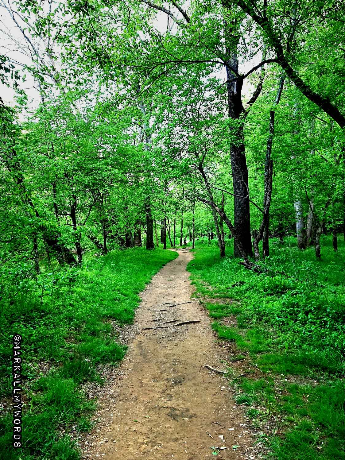 Bobbitt Hole Trail
