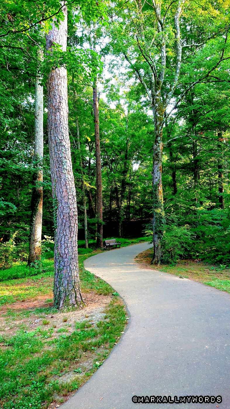 Trees line the Riverwalk in Hillsborough, NC.