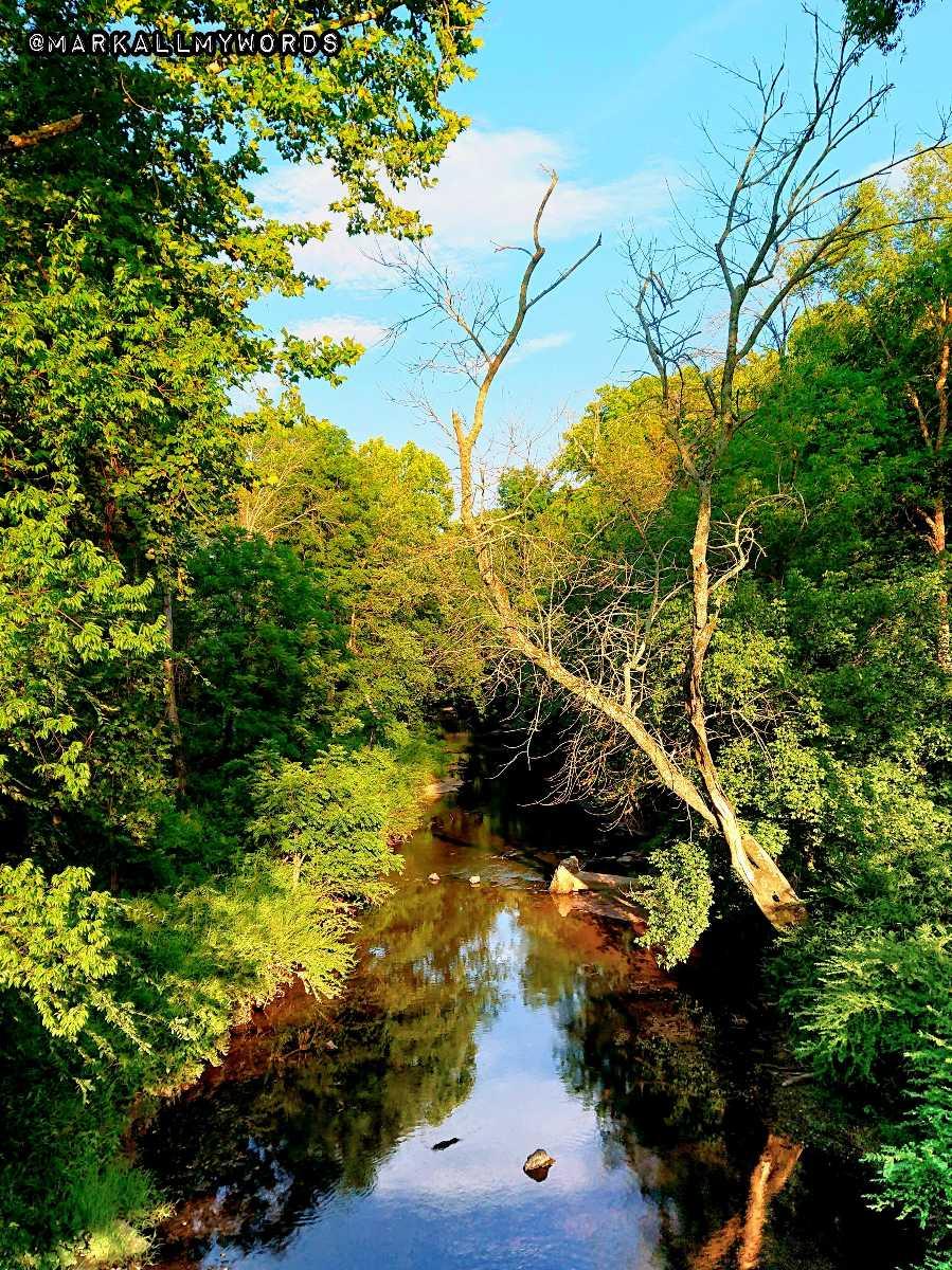 Trees line the Eno River.