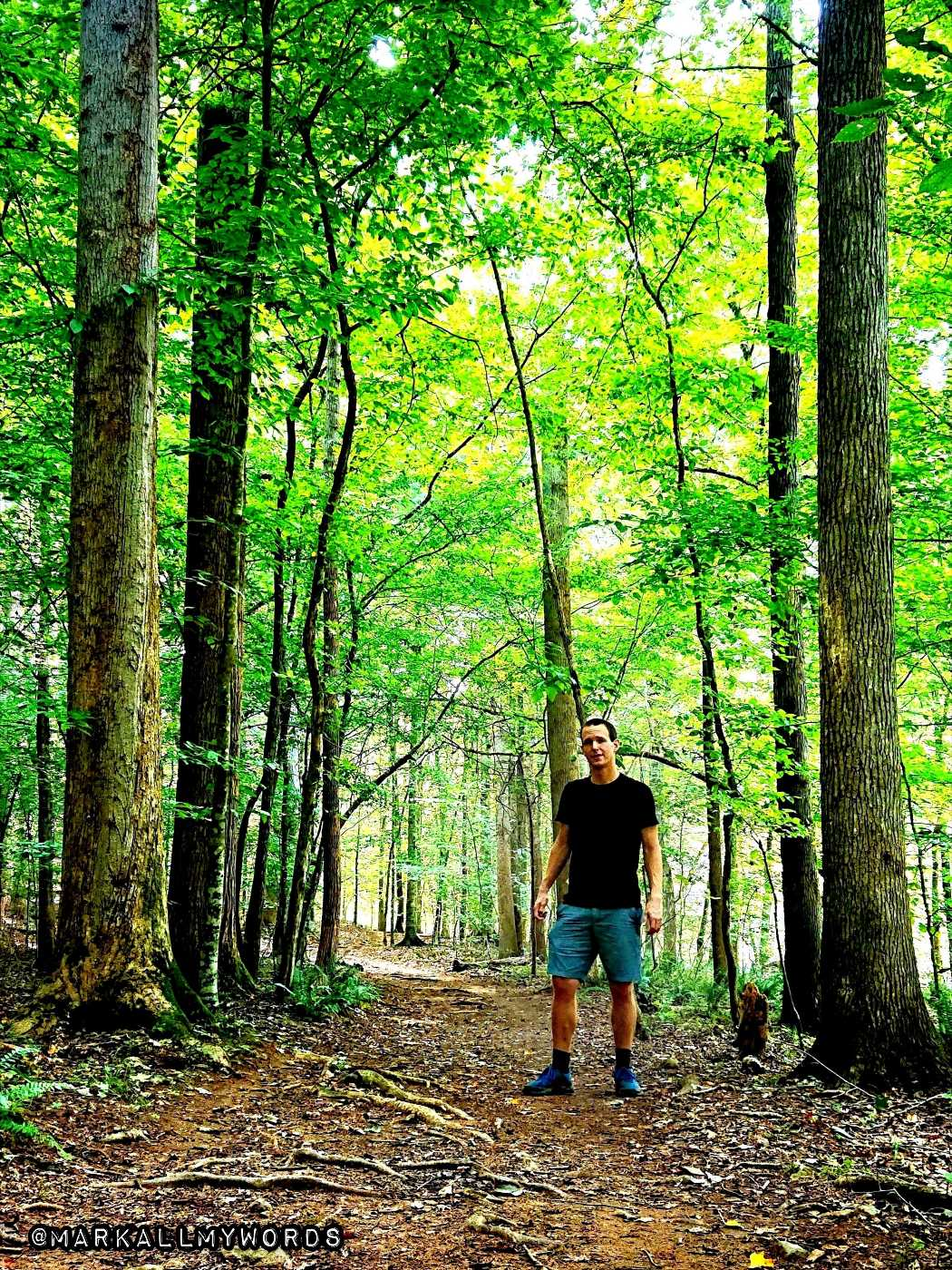 A hiker stands on a trail surrounded by trees.